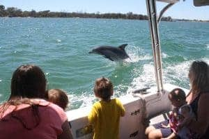 Experience a close encounter with WA's best dolphin population
