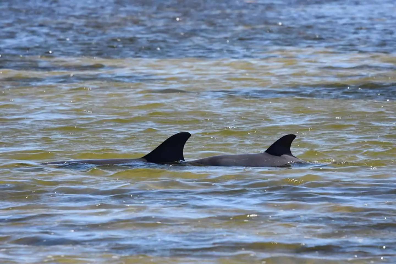 dolphin strandings