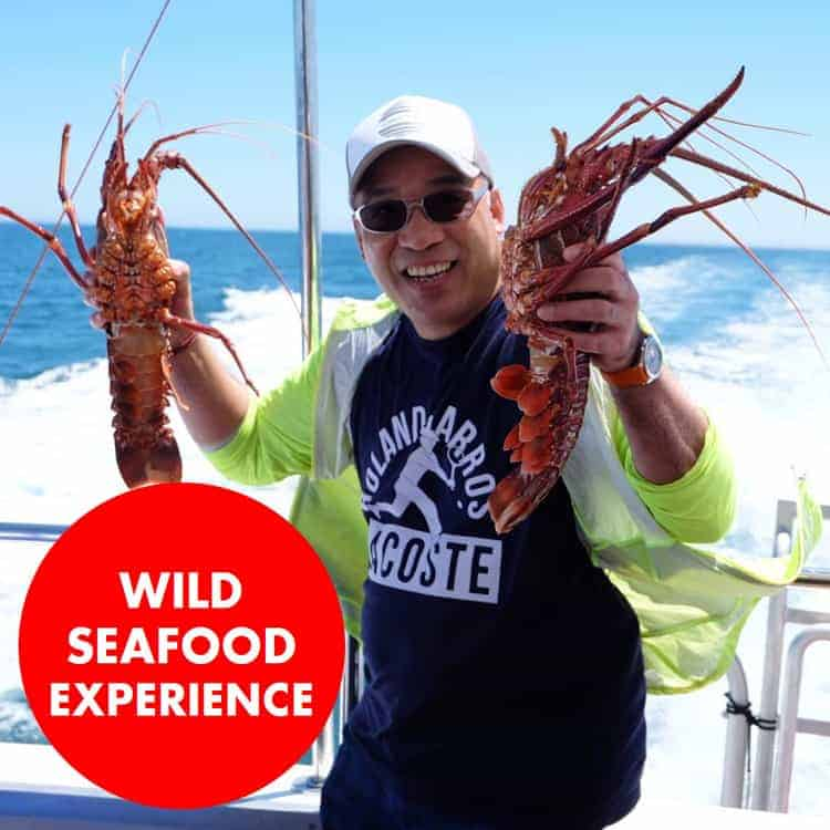 wild seafood experience crab fest