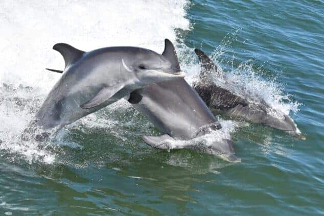 Dolphin & Scenic Canal Cruise - Playful Wild Dolphins 6